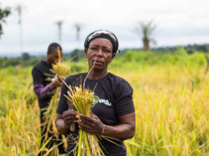 Nigerian startup Farmcrowdy secures seed funding of $1Million