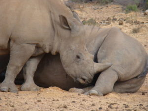 AxxonSoft to change the face of anti-poaching in South Africa