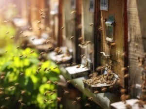 AI smart hives network helps conserve declining global bee populations