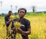 Nigerian startup Farmcrowdy closes on seed funding of $1Million