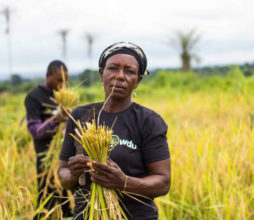 Nigeria's Value Seeds tops Access to Seeds Index