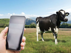 FarmRanger uses tech to tackle security for livestock farmers